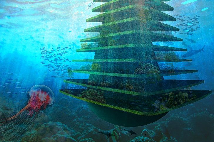 plataforma marina arbol del mar3